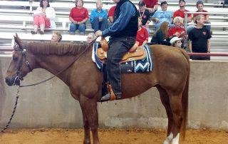 Heir the horse